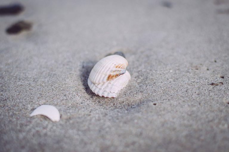 Muscheln im Sand am Strand von Brasilien (Schönberg, Schleswig-Holstein)