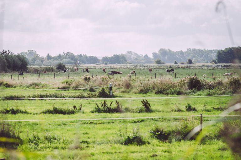 Landwirtschaft und Tierweide in Brasilien (Schönberg, Schleswig-Holstein)