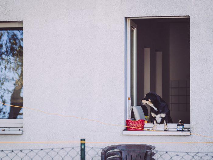 Hund schaut aus einem Fenster in Busendorf (Beelitz, Brandenburg)