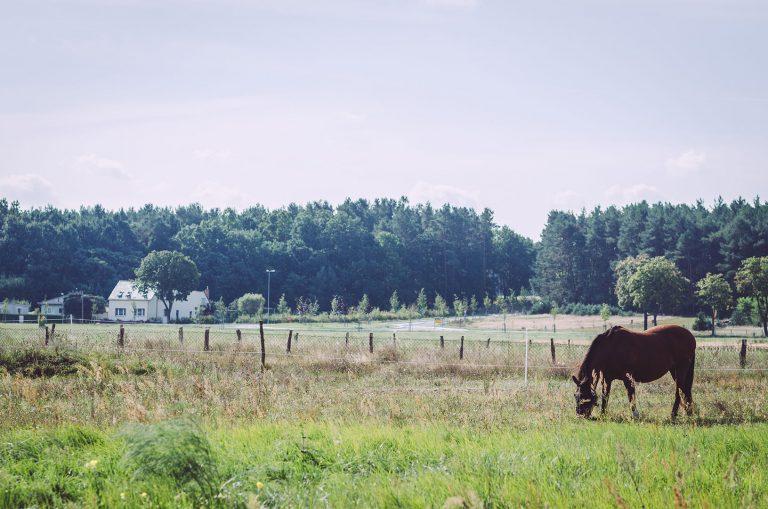 Pferd auf einer Weide in Busendorf (Beelitz, Brandenburg)