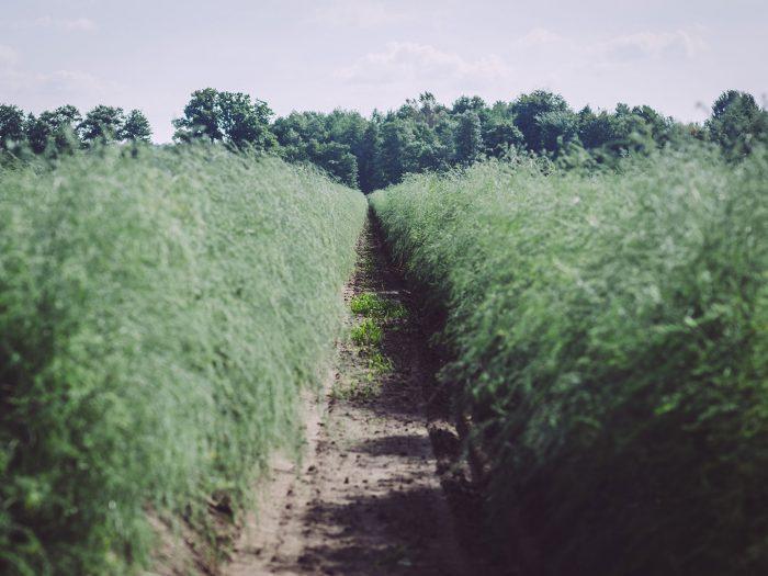 Feld und Landwirtschaft in Busendorf (Beelitz, Brandenburg)