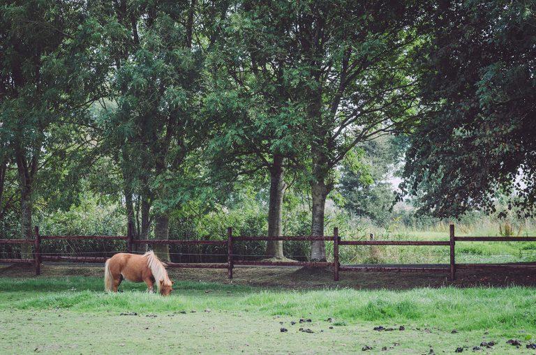 Pferdekoppel in Fetter Strich (Neuharlingersiel, Niedersachsen)