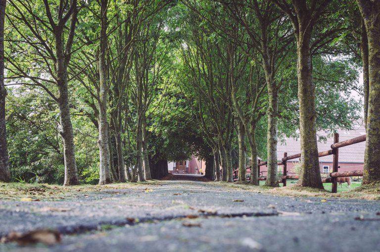 Mit Bäumen besäte Eingangsstraße in Fetter Strich (Neuharlingersiel, Niedersachsen)