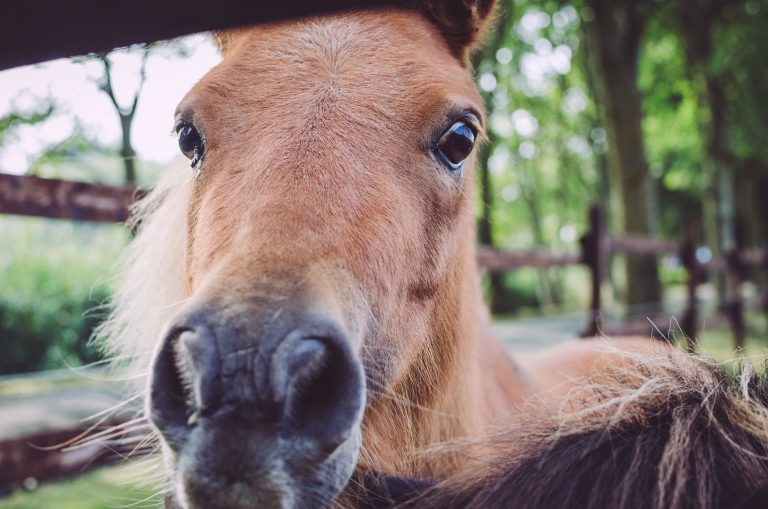Pony in Fetter Strich (Neuharlingersiel, Niedersachsen)