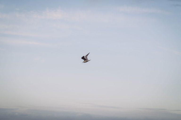 Fliegende Möwe und Himmel in Kalifornien (Schönberg, Schleswig-Holstein)