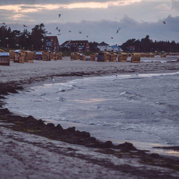 Strand am Abend mit fliegenden Möwen Kalifornien (Schönberg, Schleswig-Holstein)