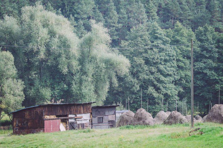 Ein Wald und davor ein Schuppen in Kanada (Münchenbernsdorf, Thüringen)