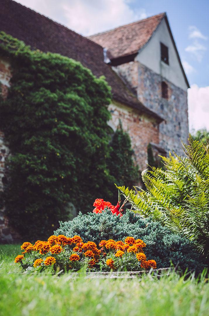 Blumen und die Kirche in Busendorf (Beelitz, Brandenburg)