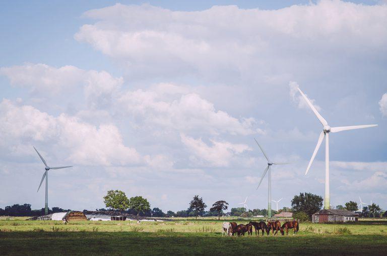 Pferde auf einer Koppel, im Hintergrund Windräder in Nordpol (Wiefelstede, Niedersachsen)