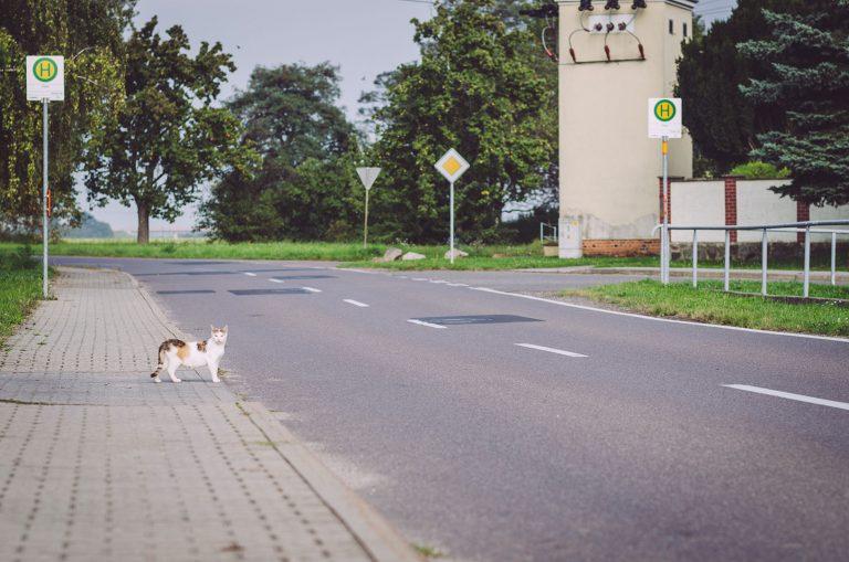 Katze an eine Straße in Pissen (Rodden, Sachsen-Anhalt)