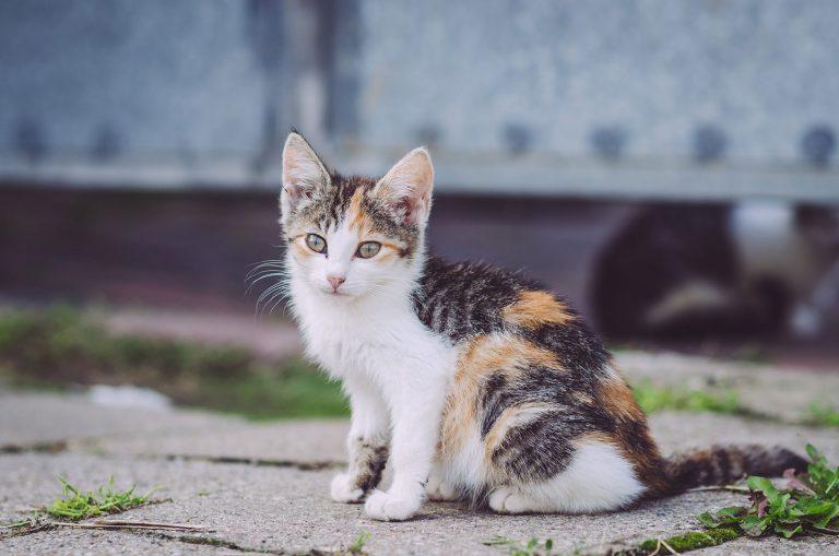Katze in Pissen (Rodden, Sachsen-Anhalt)
