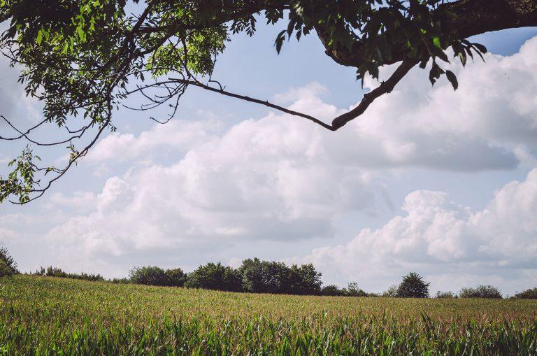 Freier Blick über ein Feld in Schweden (Mohrkirch, Schleswig-Holstein)
