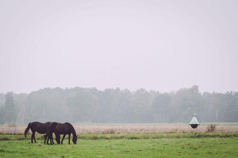 Zwei Pferde auf einer Weide in Texas (Groß Oesingen, Niedersachsen)