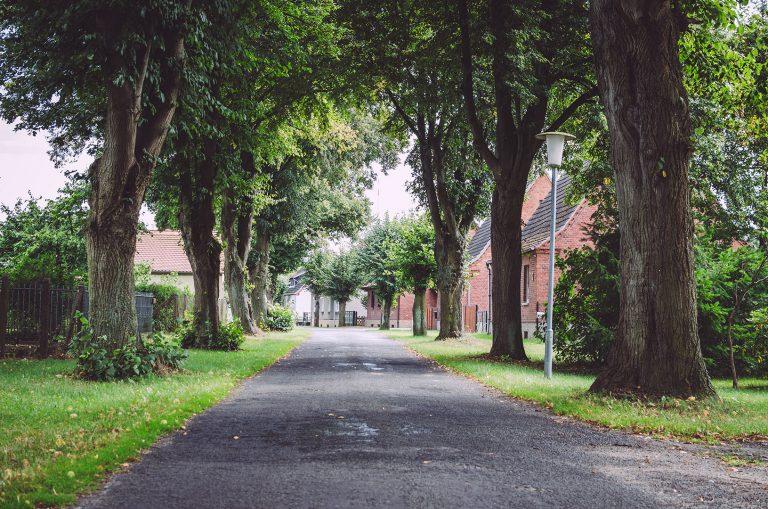 Straße mit Bäumen, Allee in Waterloo (Karstädt, Brandenburg)