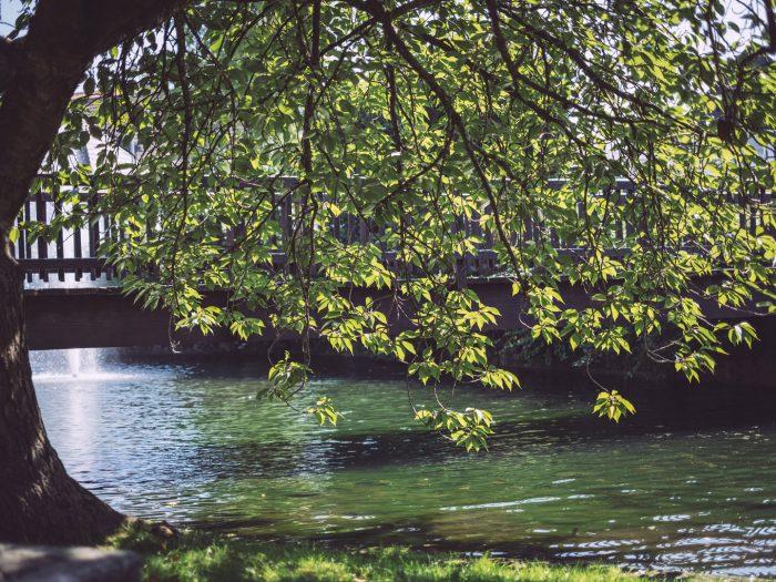 Baum über den Fluss in Bremen (Ense, Nordrhein-Westfalen)