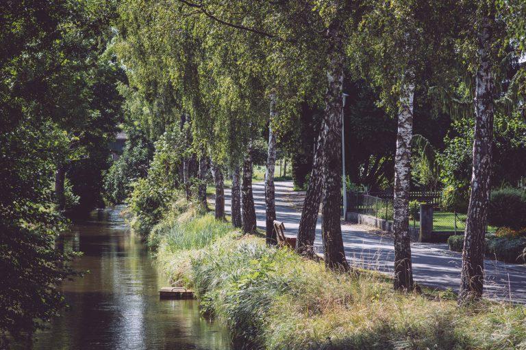 Straße mit Bäumen am Rand, daneben ein Fluss in Bremen (Hohentengen, Baden-Württemberg)