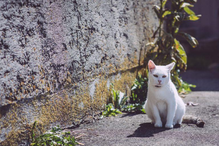 Katze sitzend auf einem Weg in Bremen (Hohentengen, Baden-Württemberg)