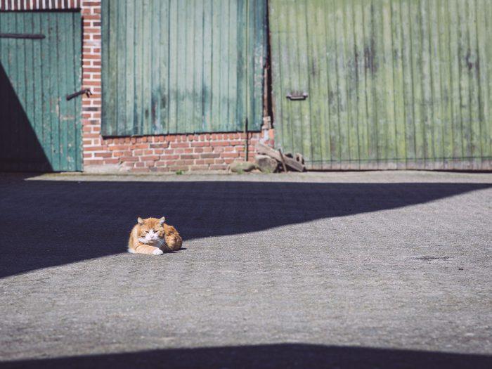 Katze in Köhlen (Geestland, Niedersachsen)