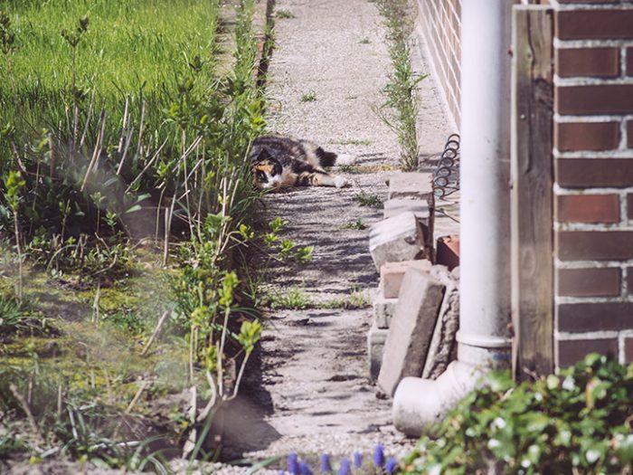 Katzen in Köhlen (Geestland, Niedersachsen)