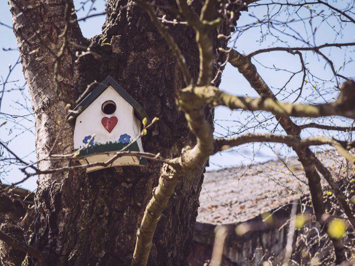 Vogelhaus in Köhlen (Geestland, Niedersachsen)