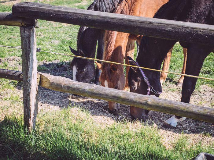 Pferde in Köhlen (Geestland, Niedersachsen)
