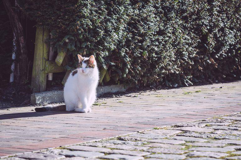 Katze in Neustadtgödens (Sande, Niedersachsen)