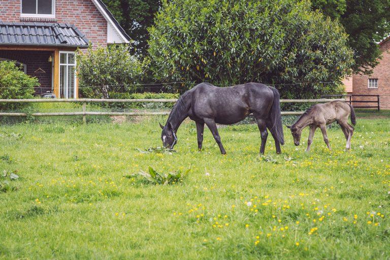 Pferd mit Fohlen in Immer (Ganderkesee, Niedersachsen)