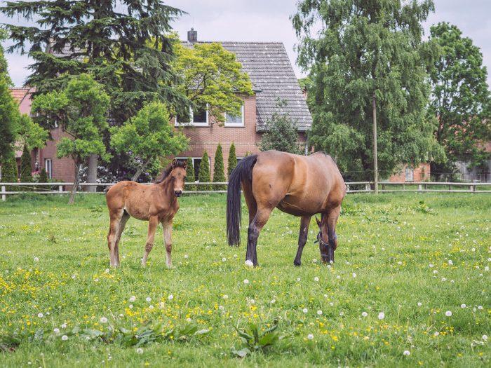 Pferd und Fohlen in Immer (Ganderkesee, Niedersachsen)