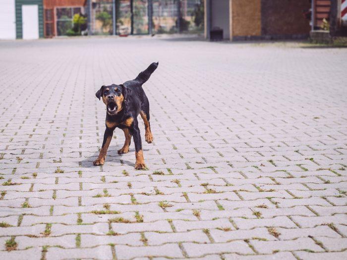 Wachhund in Immer (Ganderkesee, Niedersachsen)