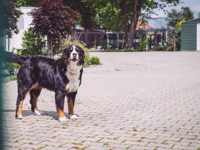 Hund in Immer (Ganderkesee, Niedersachsen)