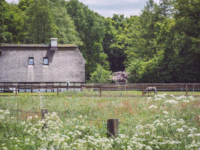 Weide in Immer (Ganderkesee, Niedersachsen)