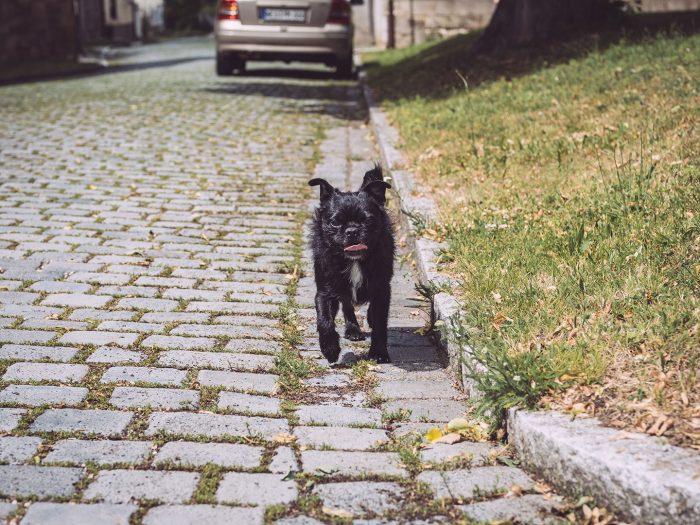 Hund in Kirchscheidungen (Burgenlandkreis, Sachsen-Anhalt)