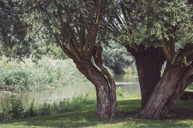 Baum an der Unstrut in Kirchscheidungen (Burgenlandkreis, Sachsen-Anhalt)