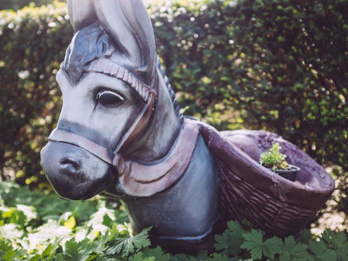Esel in Holzhausen (Immenhausen, Hessen)