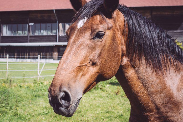 Pferd in Holzhausen (Immenhausen, Hessen)