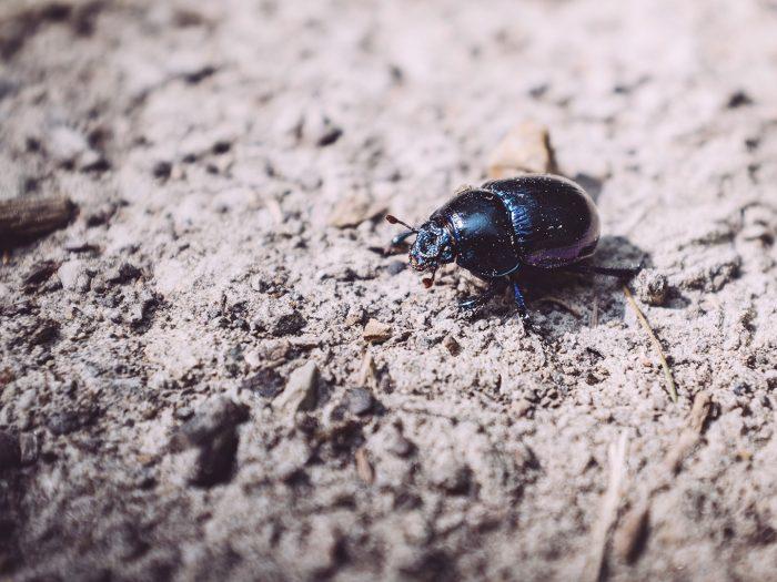 Käfer in Holzhausen (Immenhausen, Hessen)