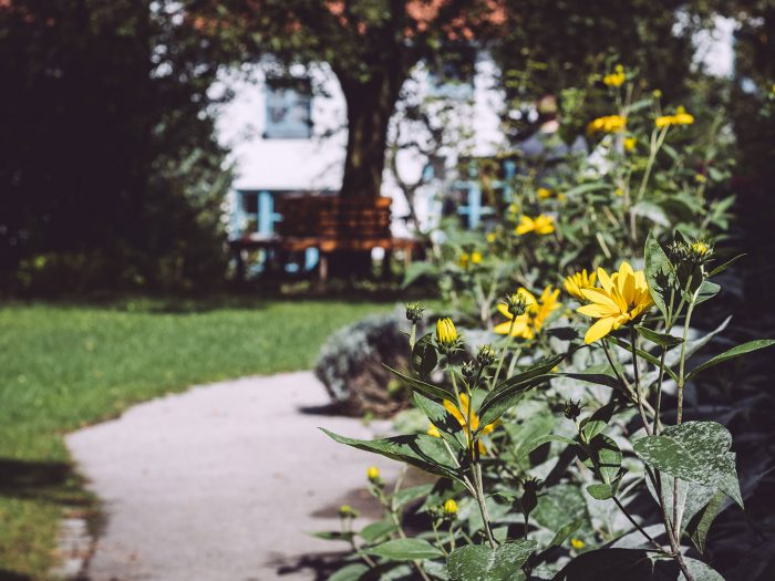 Blumen in Berg (Starnberg, Bayern)