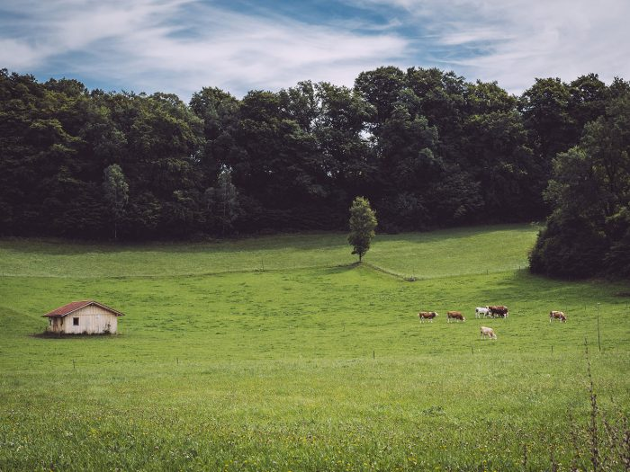 Weide in Berg (Starnberg, Bayern)