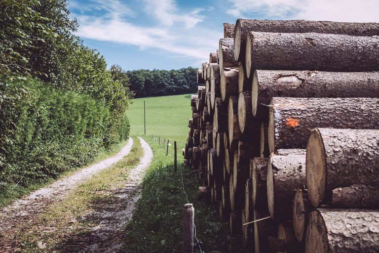 Feldweg und Holzstapel in Berg (Starnberg, Bayern)