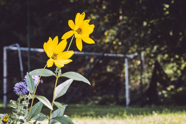 Gelbe Blume in Hölle (Naila, Bayern)