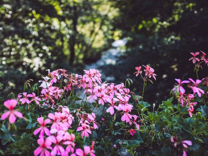 Blumen in Hölle (Naila, Bayern)