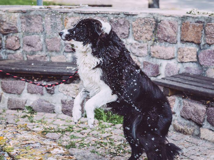 Hund in Teicha (Petersberg, Sachsen-Anhalt)