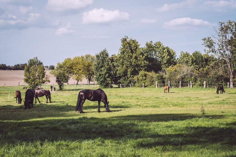 Pferdeweide in Teicha (Petersberg, Sachsen-Anhalt)