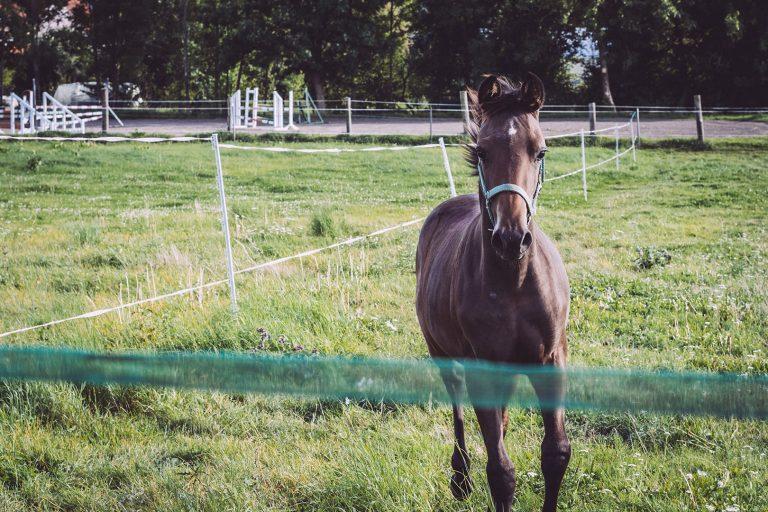 Kleines Pferd in Teicha (Petersberg, Sachsen-Anhalt)