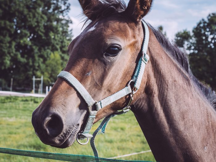 Pferd in Teicha (Petersberg, Sachsen-Anhalt)