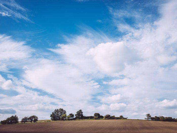 Feld in Teicha (Petersberg, Sachsen-Anhalt)