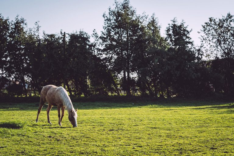 Pferd auf Weide in Düring (Loxstedt, Cuxhaven, Niedersachsen)