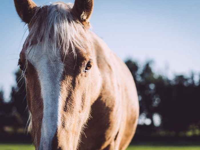 Pferd in Düring (Loxstedt, Cuxhaven, Niedersachsen)
