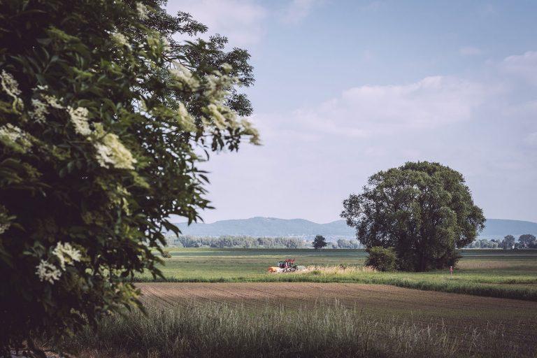 Felder in Drüber (Northeim, Niedersachsen)