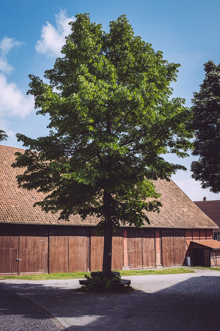 Baum in Drüber (Northeim, Niedersachsen)